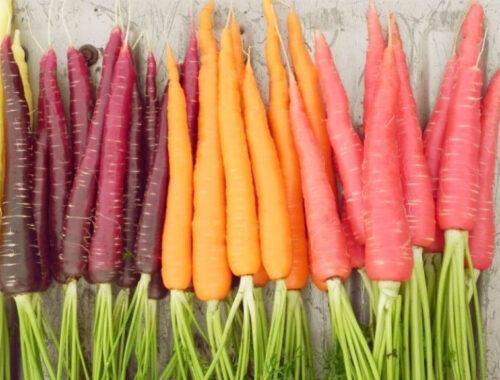 История моркови