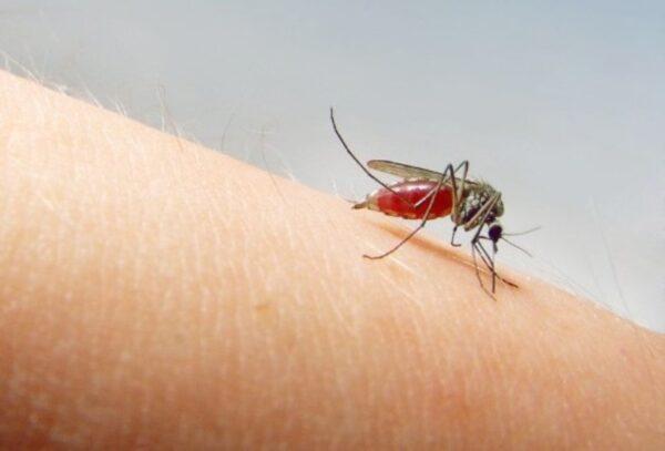 Зуд от укусов комаров